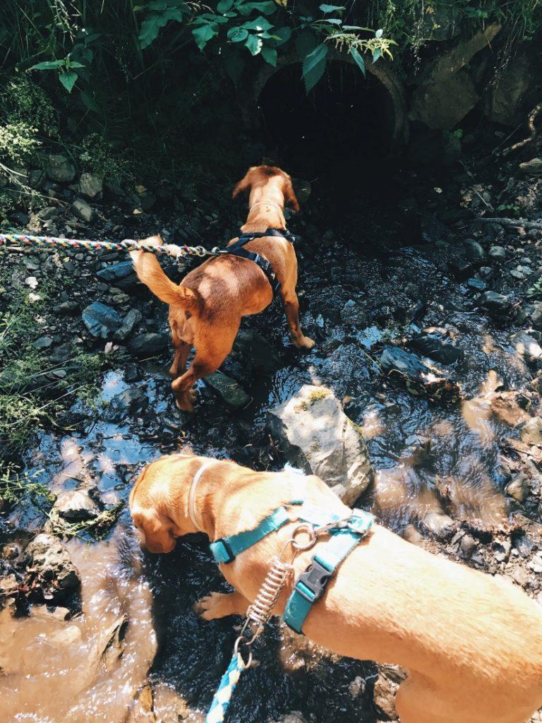 En la ruta encontramos ríos de agua helada.
