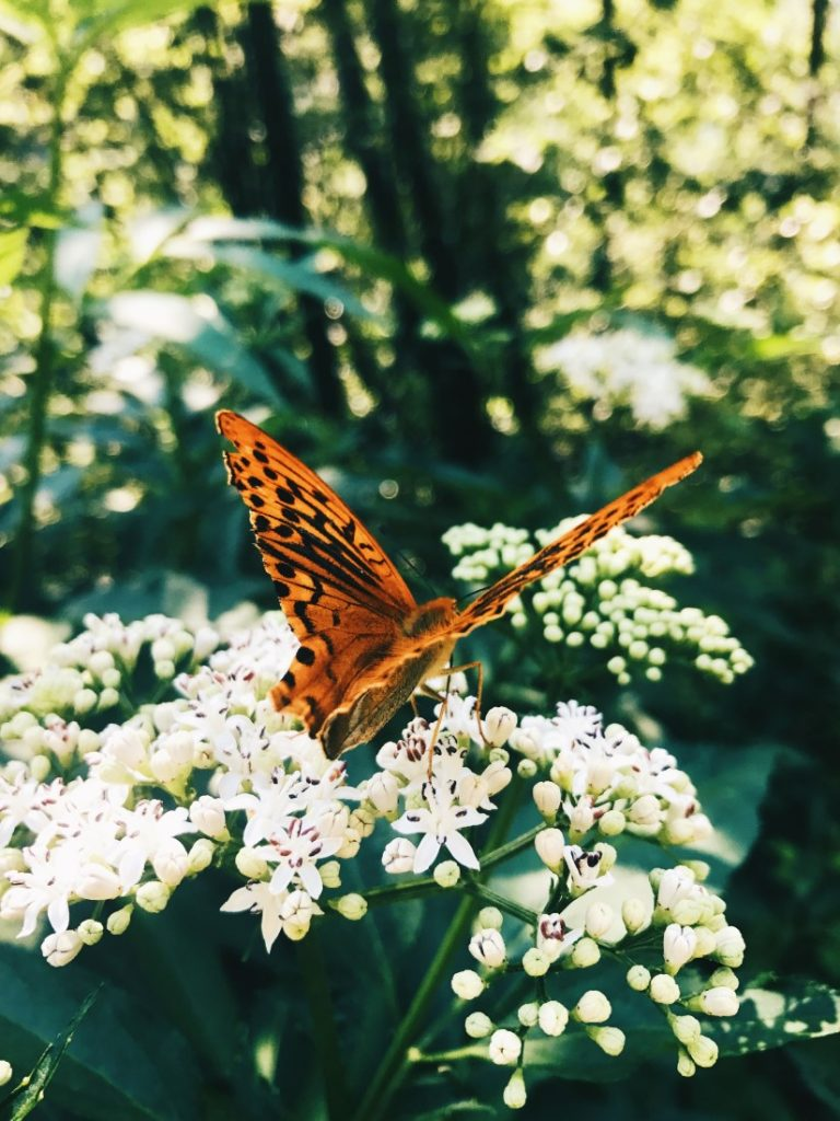 Durante la ruta encontramos mariposas de todos los tamaños y colores.