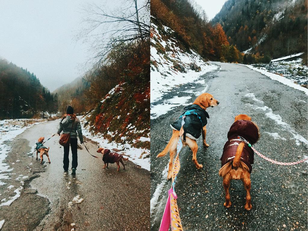 Viaje, pirineos, perros, vegano, montaña, naturaleza, escapada de fin de semana