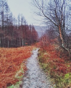 Rutas por el bosque - viajando por Escocia.