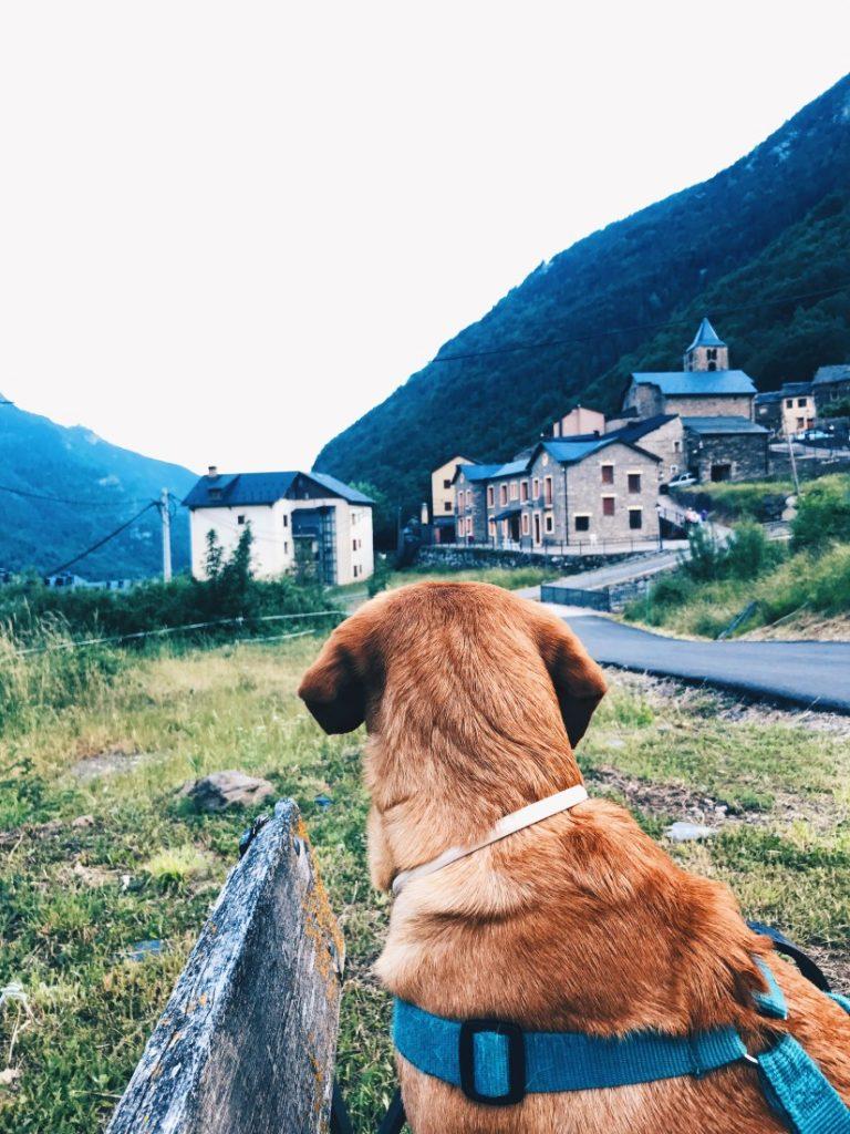 Viajar con perros por San Juan.