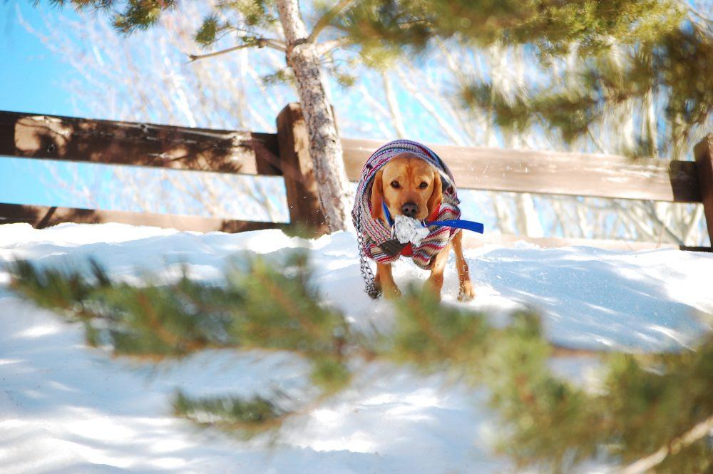 Rutas con perros por Sierra Nevada, granada.