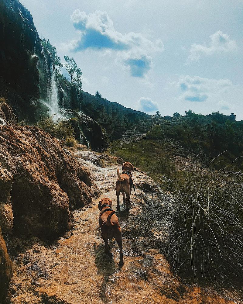 Punky y Bony corriendo por las cascadas.