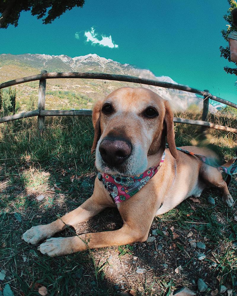 Ruta Benasque - Anciles. Rutas con perros.