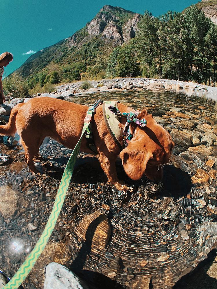 Ruta hacia Benasque desde Camping Aneto. Rutas y viajes con perros.