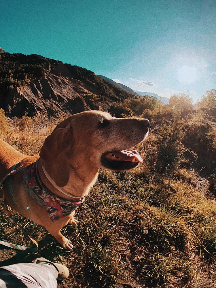 'Ruta de las 3 cascadas'. Viajes con perros en el Pirineo.