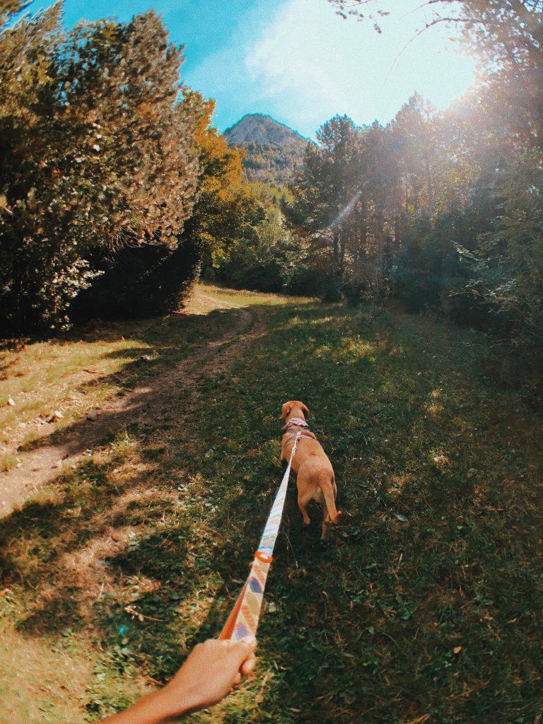 Camino de Camping Aneto a Senarta. Viajar con perros.