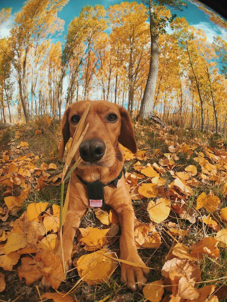 Bosques para ir con perros por Cuenca.